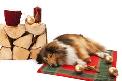 Hund, der mit Weihnachtsverzierungen schläft Stockfotografie
