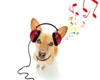 Hund, der Musik hört stockfoto