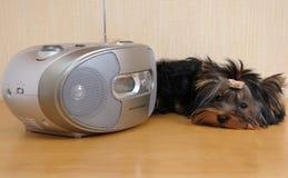 Hund, der Musik hört Stockfotografie