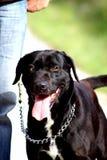 Hund, der nahe bei dem Inhaber steht Lizenzfreies Stockbild