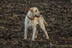 Hund in der Natur lizenzfreies stockfoto