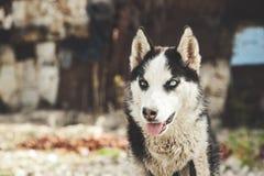 Hund in der Natur stockfoto