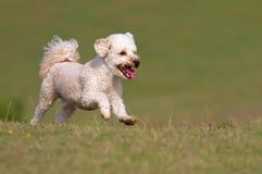 Hund, der oben einen Hügel laufen lässt Lizenzfreie Stockfotos
