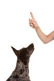Hund, der oben zum Zeigefinger schaut Stockfotografie