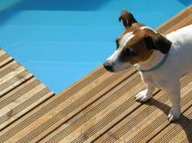 Hund, der am Pool sich entspannt stockfotografie
