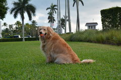 Hund, der Reichweite am Park spielt Stockfotos