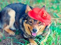 Hund, der roten Hut trägt Lizenzfreie Stockbilder