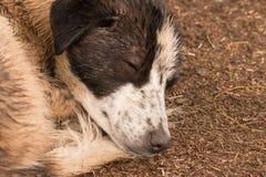 Hund, der ruhig im Regen schläft stockfoto
