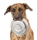 Hund, der Schüssel im Mund hält Getrennt auf weißem Hintergrund stockbild