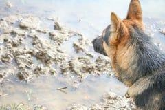 Hund, der schlammigen Pfützenhintergrund sitzt und betrachtet lizenzfreie stockbilder