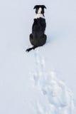 Hund, der in Schnee wartet Stockfoto