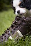 Hund, der Schuh isst Stockfoto