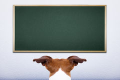 Hund in der Schule