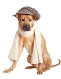 Hund in der Schutzkappe Stockfoto