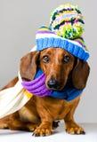 Hund in der Schutzkappe lizenzfreies stockbild