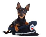 Hund in der Schutzkappe auf einem weißen Hintergrund Lizenzfreie Stockbilder