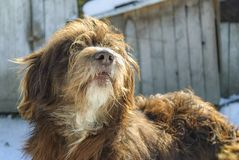 Hund, der sein Yard schützt Stockfotos