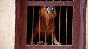 Hund, der in seinem Käfig bellt stock footage