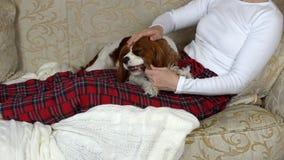 Hund, der seinen Knochen kaut stock footage