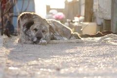 Hund, der sich hinlegt Lizenzfreie Stockfotografie