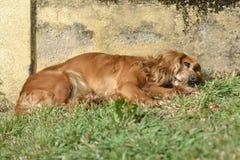 Hund, der in der Sonne stillsteht Stockbild