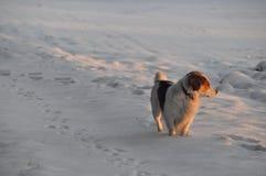 Hund, der Sonnenschein betrachtet Stockfoto