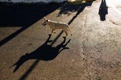 Hund an der Straße lizenzfreie stockbilder