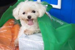 Hund in der Tasche Lizenzfreie Stockfotografie