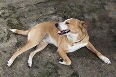Hund, der traurigen gebohrten einsamen Kranken schaut Stockfoto
