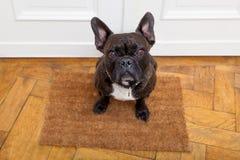 Hund, der um einen Weg bittet Lizenzfreie Stockfotografie