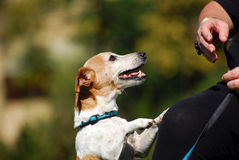 Hund, der um Lebensmittel bittet Stockbilder
