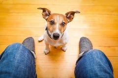 Hund, der um Nahrung bittet Stockfoto