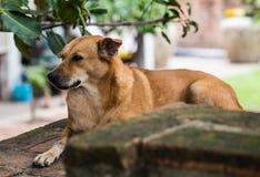 Hund, der unter einem Baum sich entspannt Lizenzfreies Stockbild