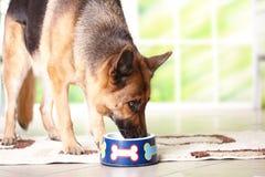 Hund, der von der Schüssel isst Stockbild