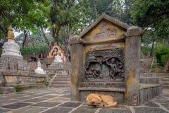 Hund, der vor einem hindischen Flachrelief schläft lizenzfreie stockfotos