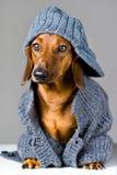 Hund in der warmen Kleidung Stockbild