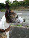 Hund, der wartet, um die Straße zu kreuzen Lizenzfreies Stockfoto