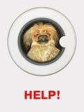 Hund in der Waschmaschine stockbild