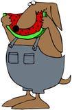 Hund, der Wassermelone isst stock abbildung
