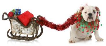 Hund, der WeihnachtsPferdeschlitten zieht Stockfoto