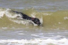 Hund in der Welle Stockfoto
