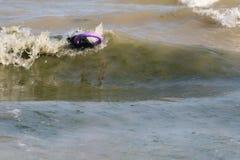 Hund in der Welle im Meer mit Abziehvorrichtung stockfoto