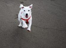 Hund, der wenn Sie kommt, benannt werden Lizenzfreies Stockbild