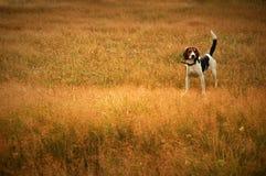 Hund in der Wiese Stockfoto