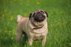 Hund in der Wiese stockbilder