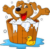 Hund, der Zeit badet Lizenzfreie Stockfotografie