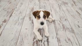 Hund, der zu Hause liegt stock video