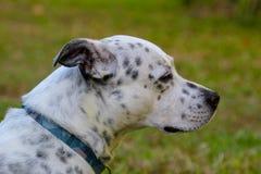Hund, der zum Horizont schaut stockfotos