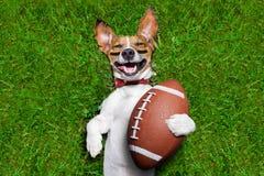 Hund des amerikanischen Fußballs stockfotos