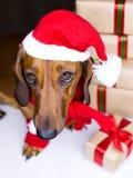 Hund des Feiertags Stockfotos